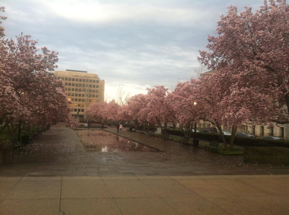 DC_spring_pink