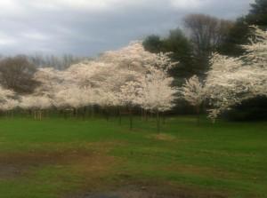 DC_spring_white